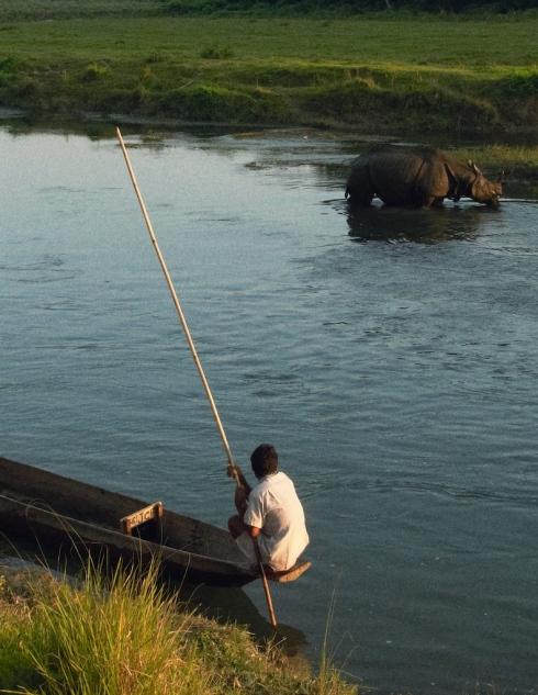 Rhino at  Chitwan. John Callaway 2010