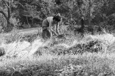 Field work... John Callaway 2011