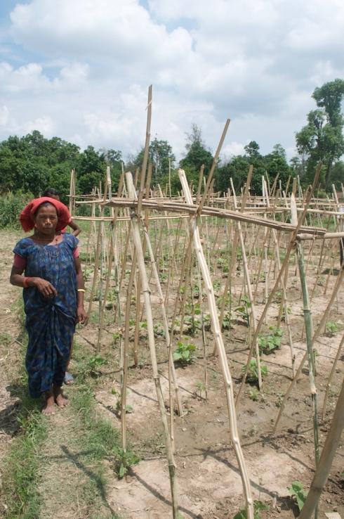 Community Farming, Masurya, Western Nepal. John Callaway 2011