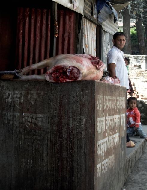 Fresh Meat. John Callaway 2010