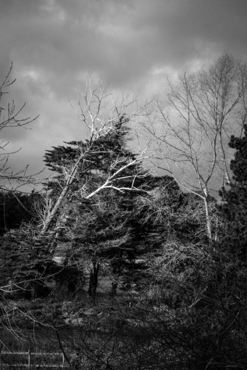 Bedhampton. John Callaway 2014