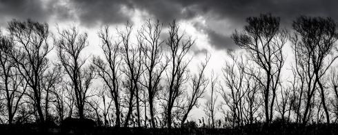 Trees @ Farlington Marshes. John Callaway 2015