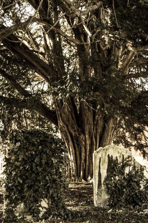 St Faith's Churchyard, Havant. John Callaway 2015